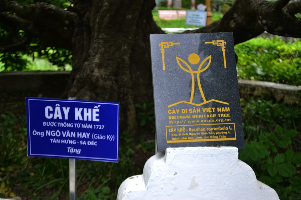 There are 2 star fruit trees and sop planted next to the grave of Nguyen Sinh Sac, recognized by the Vietnam Association for the Protection of Nature and Environment as a Vietnam Heritage tree on December 18, 2014 and became the first ancient trees of Dong Thap province is recognized as a Vietnam Heritage tree.  Photo: Luc Tung